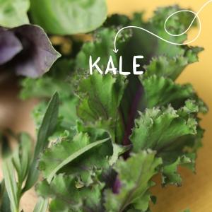Varză Kale (legătură)