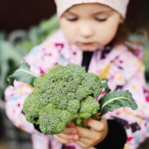 Broccoli (+/- 1 kg)